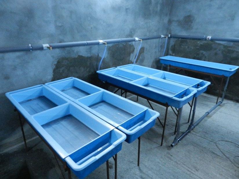 incubatoare-icre-salmonide